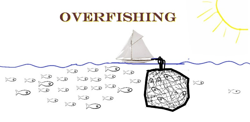 Over Fishing ThumbNail -Elton Lee